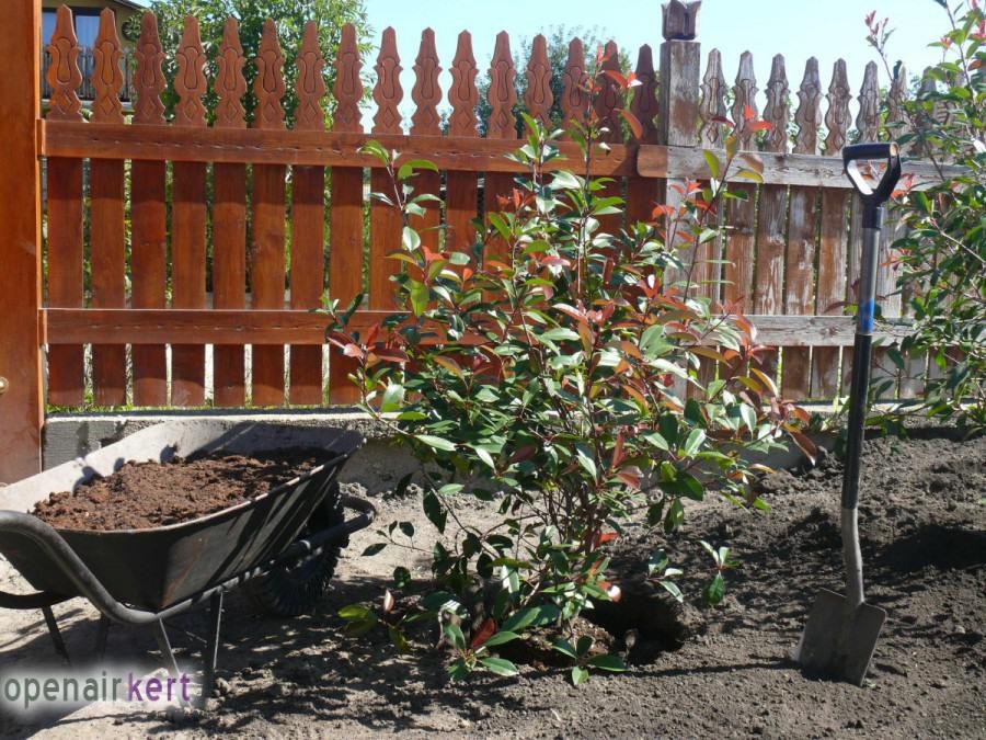 A kertépítés folyamata - Csepel - növényültetés