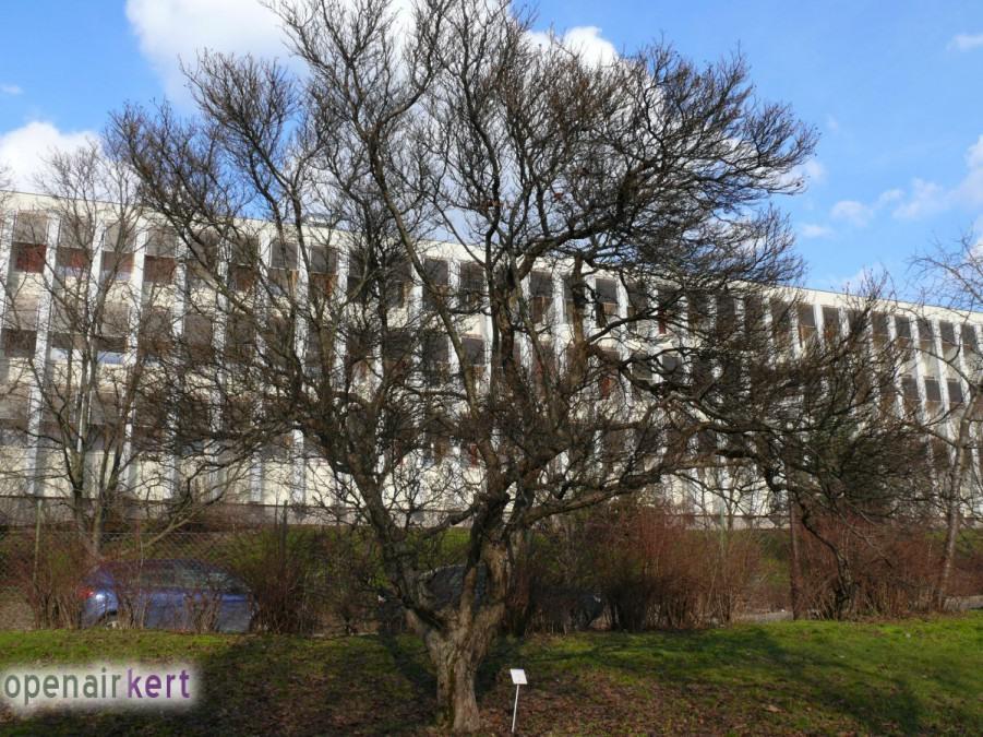 Kerttervezés okosan - Télen is díszítő lombhullató fák