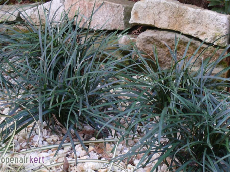 Kerttervezés okosan - Télen is díszítő növények