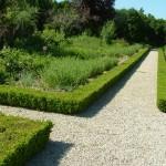 Jelzősövénynek ideális - örökzöld puszpáng